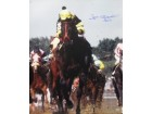 Jean Cruguet signed Kentucky Derby Horse Racing 16x20 Photo Vertical w/ Slew 77