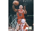Dennis Rodman Signed 16X20 Photo - Bulls Rebounding