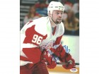 Tomas Holmstrom Autographed 8x10 Photo Red Wings PSA/DNA #U96411